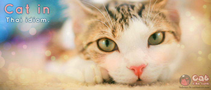 สำนวนไทยกับแมว