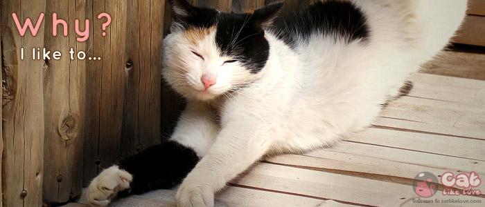 สารพันข้อสงสัยเกี่ยวกับแมว