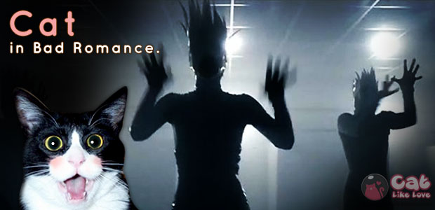 Cat in Bad Romance