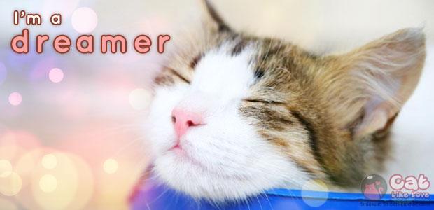 แมวก็มีฝัน...ว่าแต่ฝันของแมวเป็นยังไงน้อออออ