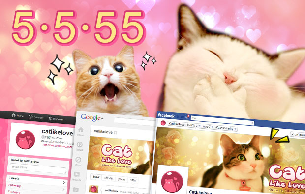 เปิดตัวเว็บ Cat Like Love