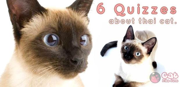 6 คำถามน่ารู้เกี่ยวกับแมวไทย