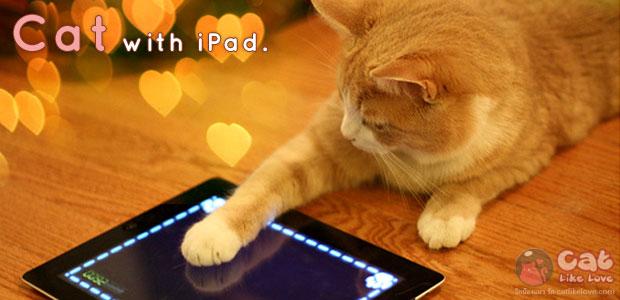 iPad ของเล่นอินเทรนด์ของแมวเหมียว