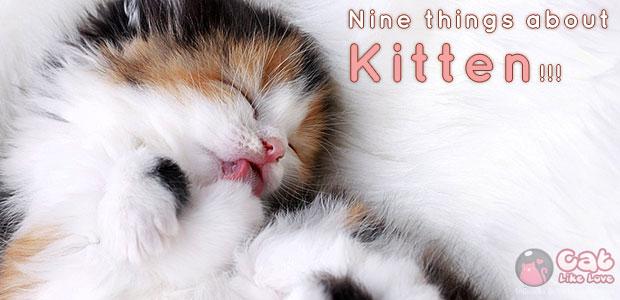 9 เรื่องน่ารู้ สำหรับก้าวเล็กๆ ของลูกแมว