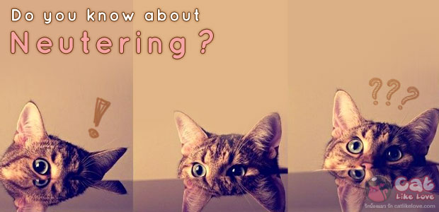 [Knw] รู้มั๊ยยย??? ข้อควรรู้ก่อนจะพาน้องแมวไปทำหมัน