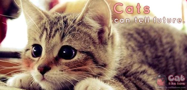 [Knw] เชื่ออ๊ะเป่า...น้องแมวทำนายอนาคตได้ด้วยนะ !!!