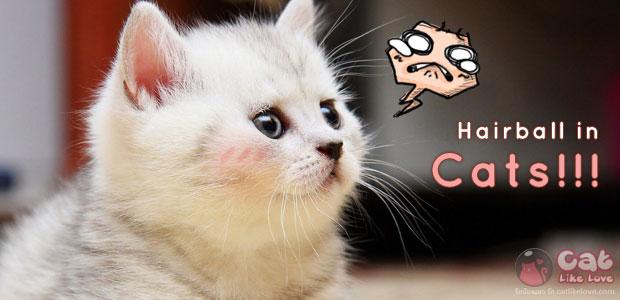[Tips] ว๊ากกก...ทำไงละเนี๊ยยย น้องแมวเป็นแฮร์บอล T^T