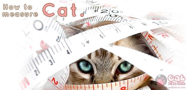 [Tips] วัดขนาดตัวน้องแมวเทียบกับไซส์เสื้อยังไงให้น้องแมวใส่สบาย???