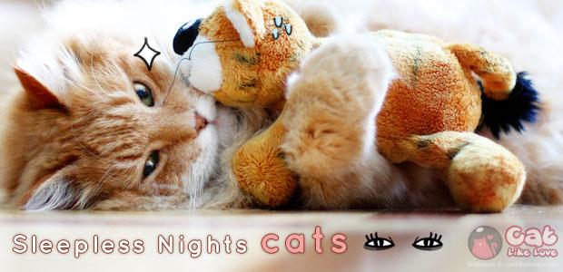[Knw] ทำไมน้องเหมียวไม่ยอมนอนตอนกลางคืน...แก้ได้มั๊ยเนี๊ยยย!!!