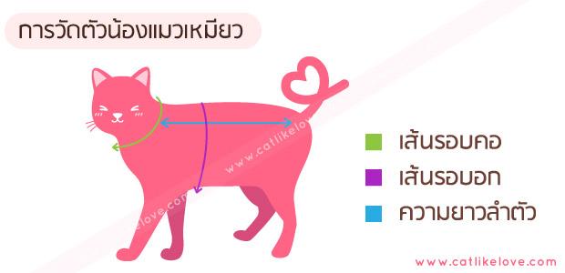 การวัดตัวน้องแมว