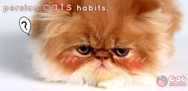 [Knw] ทำความรู้จักกับนิสัยของแมวเปอร์เซียสุดที่รักกันดีกว่าาา