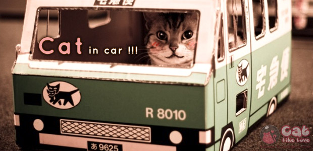 [Knw] น้องแมวเหมียวกลัวการเดินทาง เราจะทำไงกันดีละ!!!
