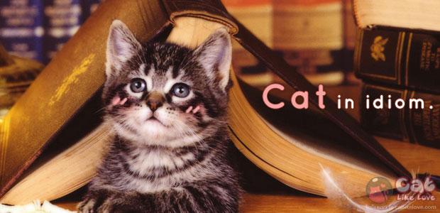 [Knw] คำคมแมวเหมียว สำหรับคนรักแมวโดยเฉพาะ !!!