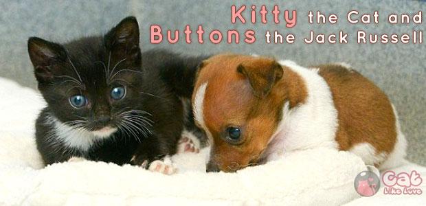 [News]คิตตี้ และ บัตตัน แมว-หมาเพื่อนซี้สุดเลิฟ !!!