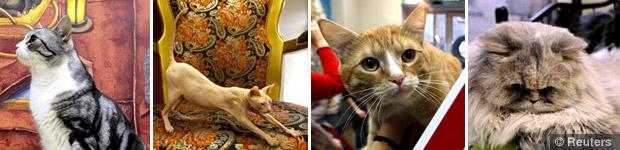Cats Republic คาเฟ่น้องแมว