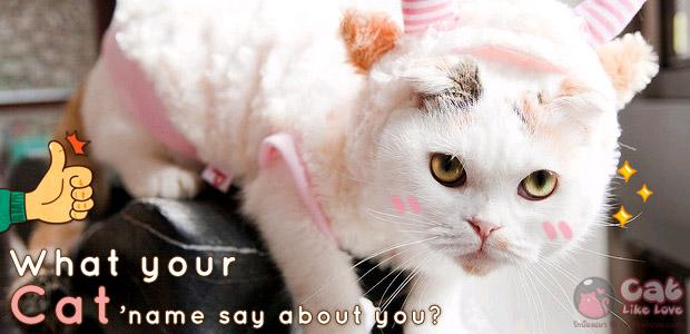 [Tips] เทคนิคการตั้งชื่อแมว และทายนิสัยจากการตั้งชื่อน้องแมว !!!