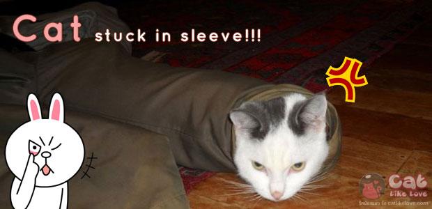 [Clips] ไม่รู้เป็นอะไร...น้องแมวชอบมุด...มุดแล้วก็ออกไม่ได้!!!