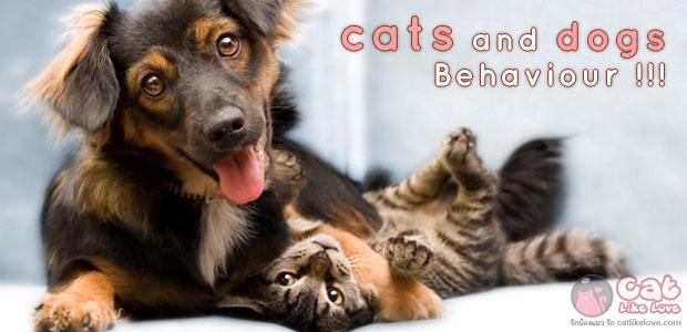 [Knw] นิสัยน้องแมวกับน้องหมาต่างกันยังไงน้อ?