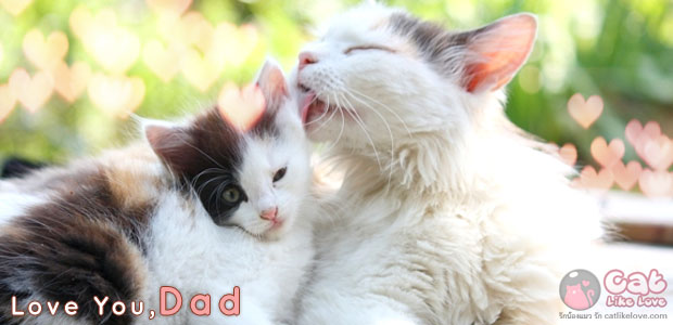 บอกรักพ่อ ฉบับแมวเหมียววว...รักพ่อที่สุดในโลกเล๊ยยย