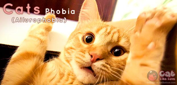 [Knw] โรคกลัวแมว!!! มีจริงอ๊ะ???
