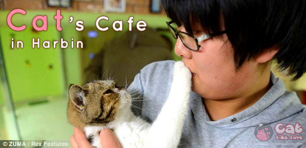 Cat coffee shop in Harbin