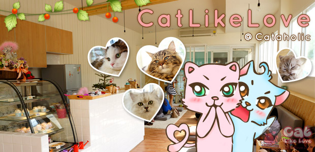[Shops] CatLikeLove นำเที่ยวคาเฟ่แมวสุดน่ารัก Cataholic cafe' !!!