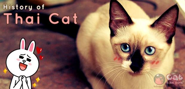 [Knw] ย้อนรอยประวัติศาสตร์ไปกับแมวไทย