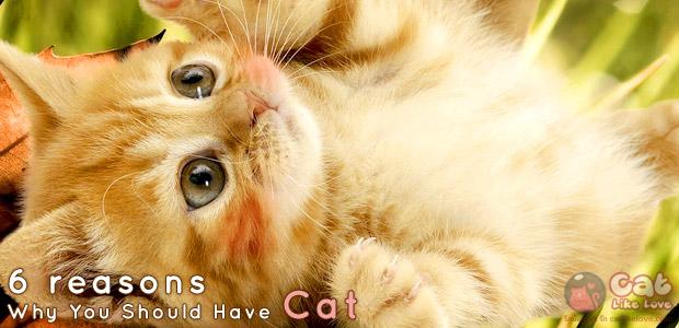 [Knw] 6 ข้อดี ของการเลี้ยงแมว...เมี๊ยววว