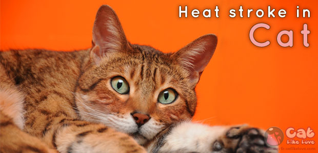 [Dis] อันตรายหน้าร้อน ตอน โรคลมแดด