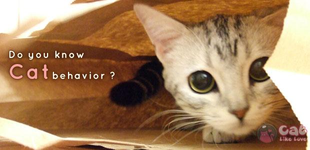 [Knw] นิสัยแม๊ววว นิสัยแมว คอมเฟิร์มเลยแบบเนี๊ยยย!!!