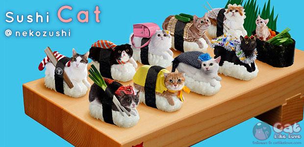 """[News] """"ซูชิแมว"""" กินไม่ได้แต่น่ารัก...ฮิตติดกระแสโลกออนไลน์!!!"""