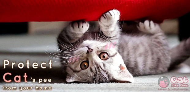 [Tips] ทำไงดี!!! น้องแมวฉิ้งฉ่องหน้าบ้าน T^T
