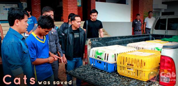 [News] ตำรวจไทยช่วยแมว 90 ชีวิต ก่อนโดนส่งขายเปิบพิสดาร