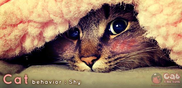 [knw] น้องแมวแกล้งทำเป็นเมิน...รักนะแต่ไม่แสดงออก
