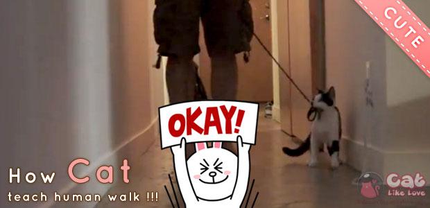 [Clip] คลิปน่ารัก สอนแมวให้จูงเจ้านายเดินเล่น!?!