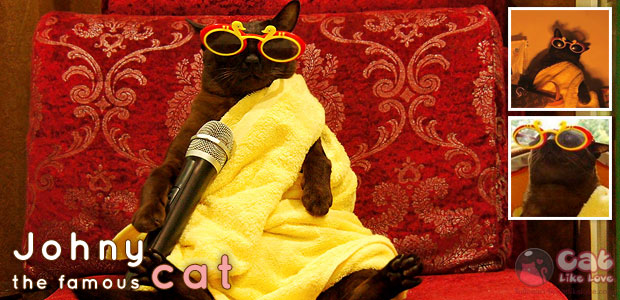 """[news] กระแส """"อาตแมว"""" เจ้าของวลี """"เจริญพุง"""" ล้อเณรคำ"""