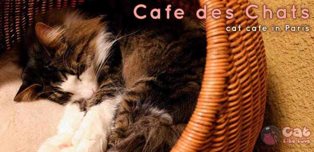 """[Shops] """"Cafe des Chats"""" คาเฟ่แมวลุยแดนน้ำหอม!!!"""