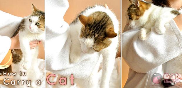 [Tips] อุ้มแมวอย่างไรให้ถูกวิธี...จะได้ไม่เจ็บตัว!!!