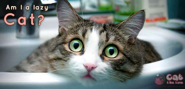 [Knw] แมวไม่ได้อู้...เอาแต่นอนนะเมี๊ยววว