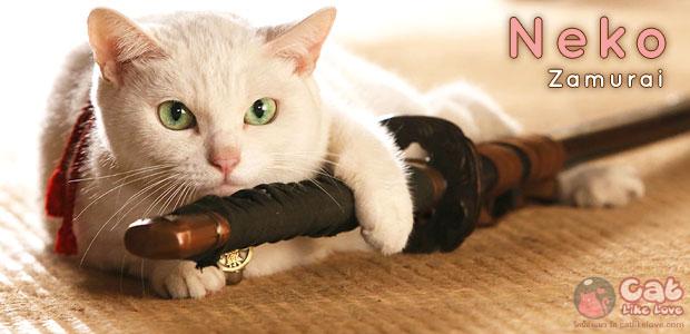 [Movie] Neko Zamurai หนังดีเพื่อคนรักแมว