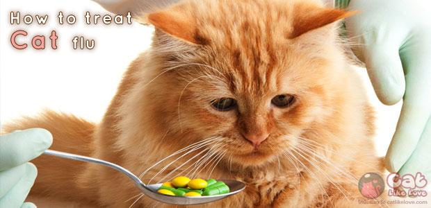 [Tips] เคล็ด(ไม่)ลับดูแลแมวที่เป็นไข้หวัด!!!