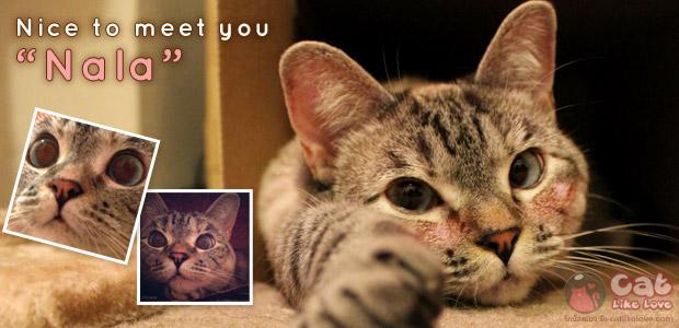 [News] มารู้จัก Nala เซเลปแมวเหมียวบนโลก instragram!!!
