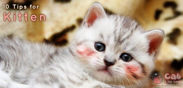 [Tips] 10 วิธีง่ายๆ ดูแลลูกแมวตัวน้อย
