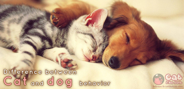 [knw] พฤติกรรมต่างสุดขั้วของน้องหมาและน้องแมว!!! สุดฮา
