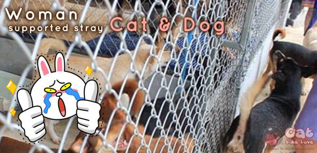 [News] สุดยอด!!! นักธุรกิจสาวควักเงินเลี้ยงหมาแมวนับร้อยตัว
