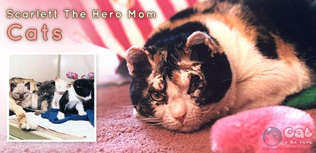 """ความรักที่ยิ่งใหญ่ของแม่แมว """"สการ์เล็ต"""""""