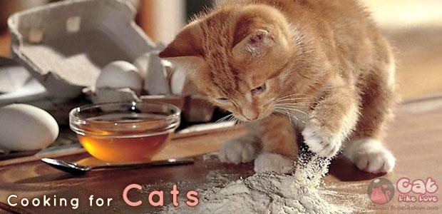 [Tips] มาทำอาหารสุดง่าย...ให้น้องแมวกินกันดีกว่า!!!