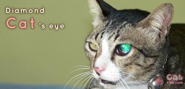 [Knw] รู้ลึกรู้จริงเรื่องแมวตาเพชร