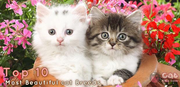 [Knw] 10 พันธุ์แมวที่สวยที่สุดในโลก