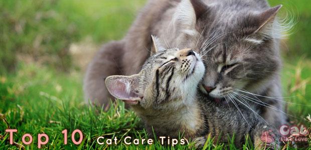 [Tips] 10 เคล็ดลับดูแลน้องแมวแบบมือโปร
